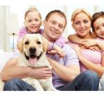 Haustierfreundliche Hotels mit Over-the-Top Haustier-Verwöhnen