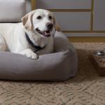 Haustierfreundliches Hotel: Können Sie für Ihren nächsten Urlaub das richtige finden?