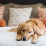 Tierfreundliche Hotels: notwendiger Service versus sinnloser Service